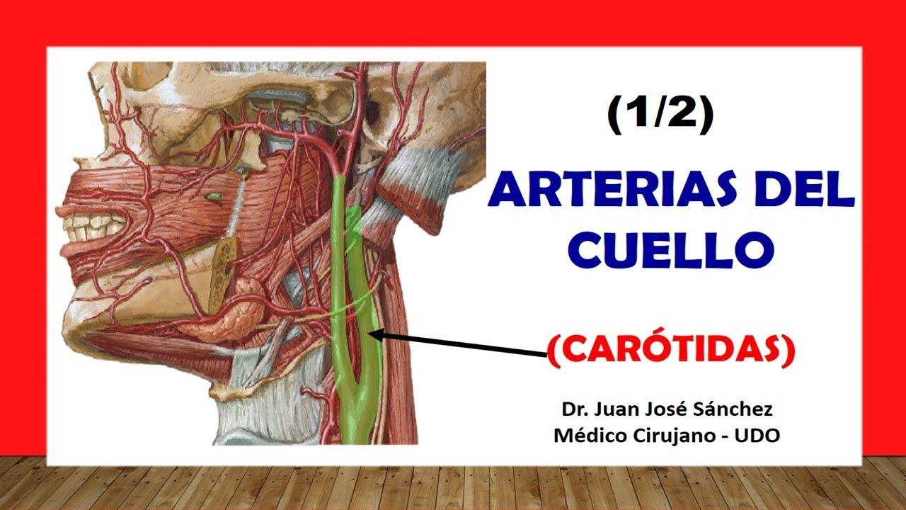 carotida interna y externa pdf