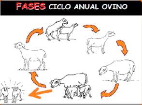 condiciones para el desarrollo de enfermedades en ovinos