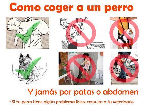 como cuidar una mascota instrucciones