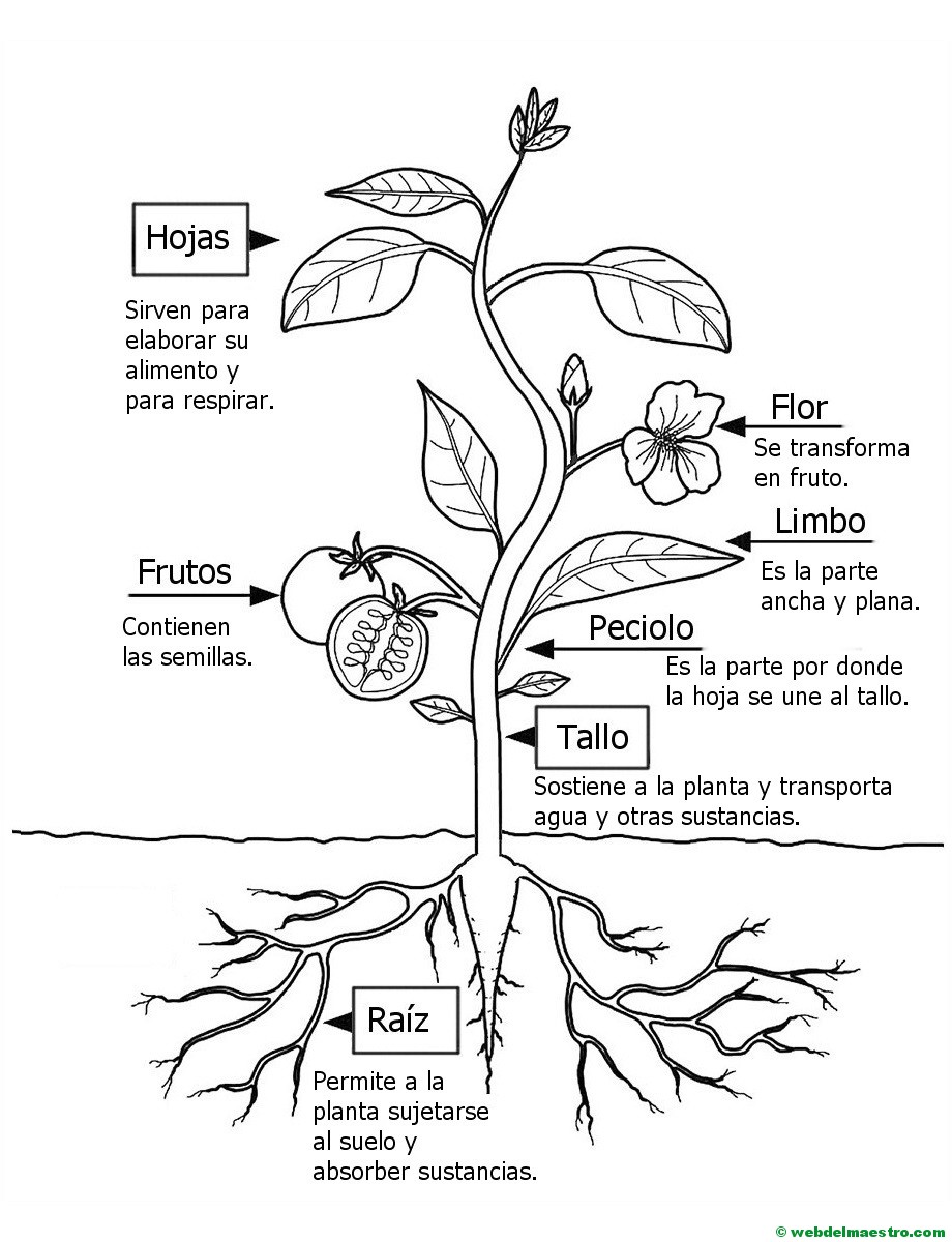 como enseñar botanica en preescolar pdf