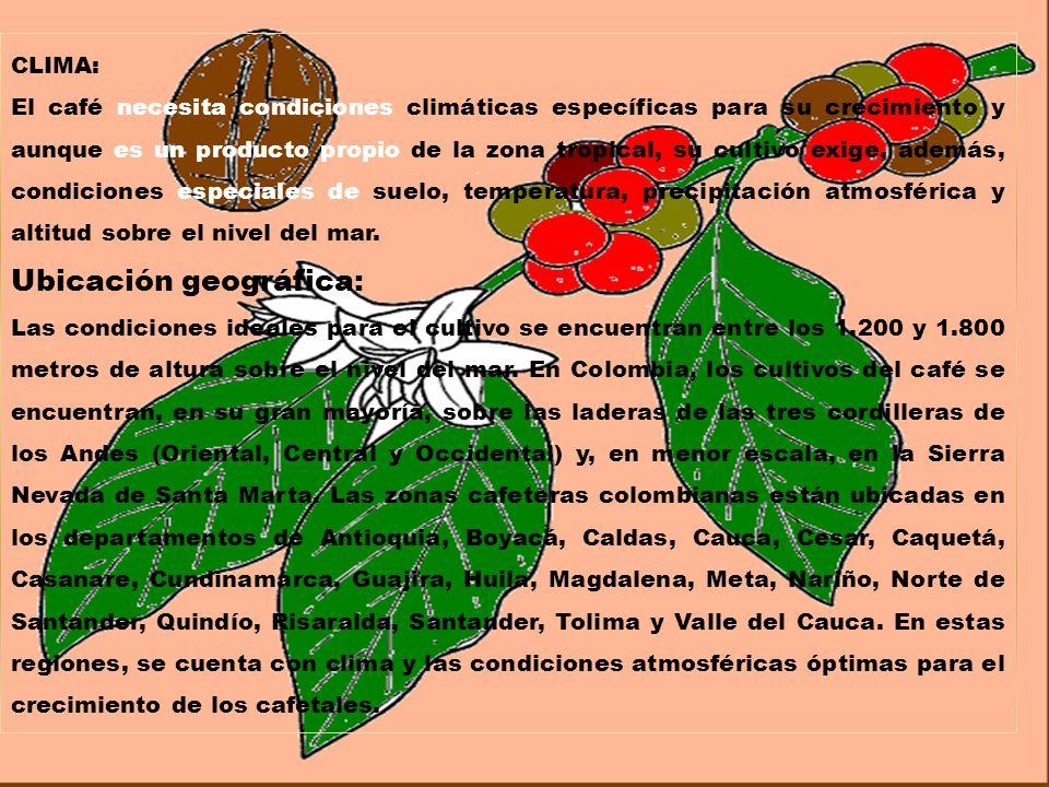 condiciones de suelo optimas para el crecimiento de arboles