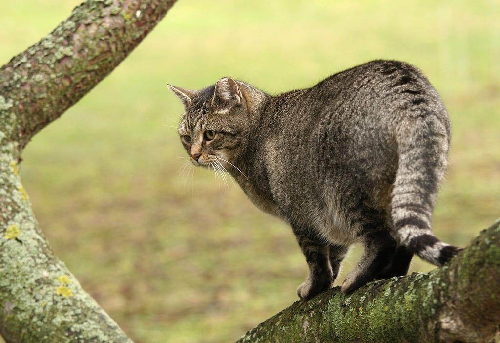 conducta de un gato pdf