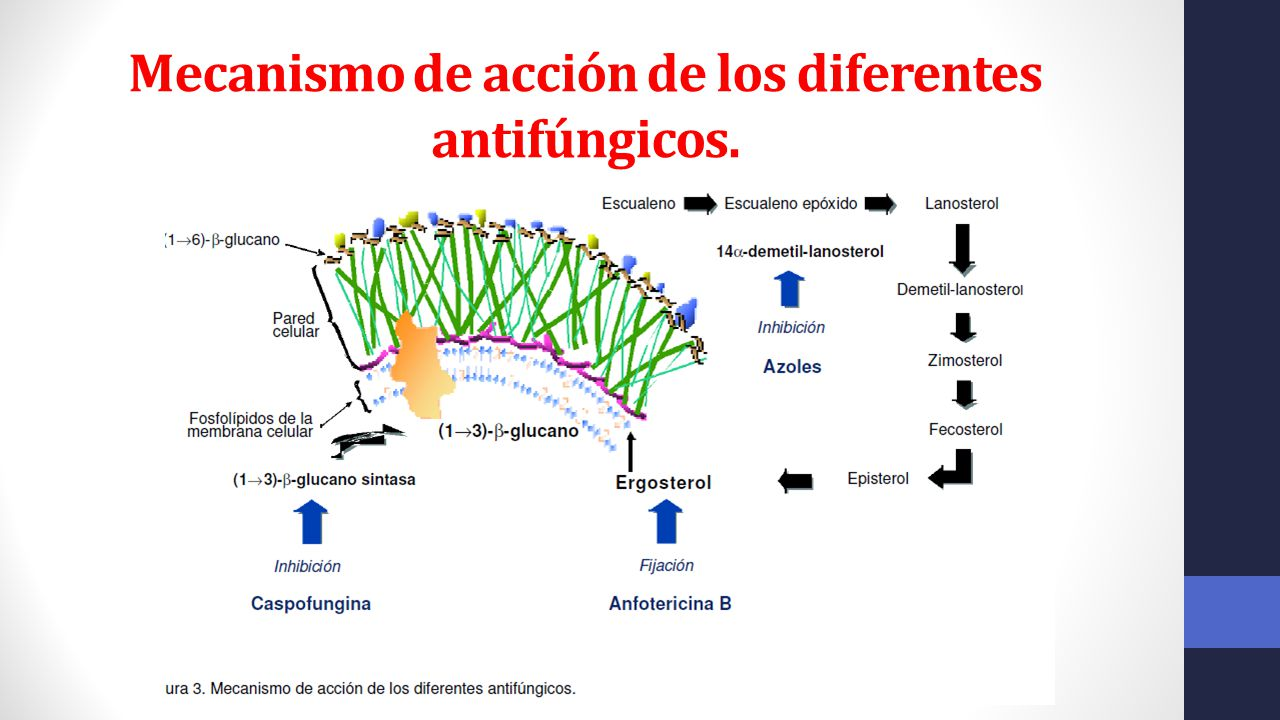 antimicoticos mecanismo de accion pdf