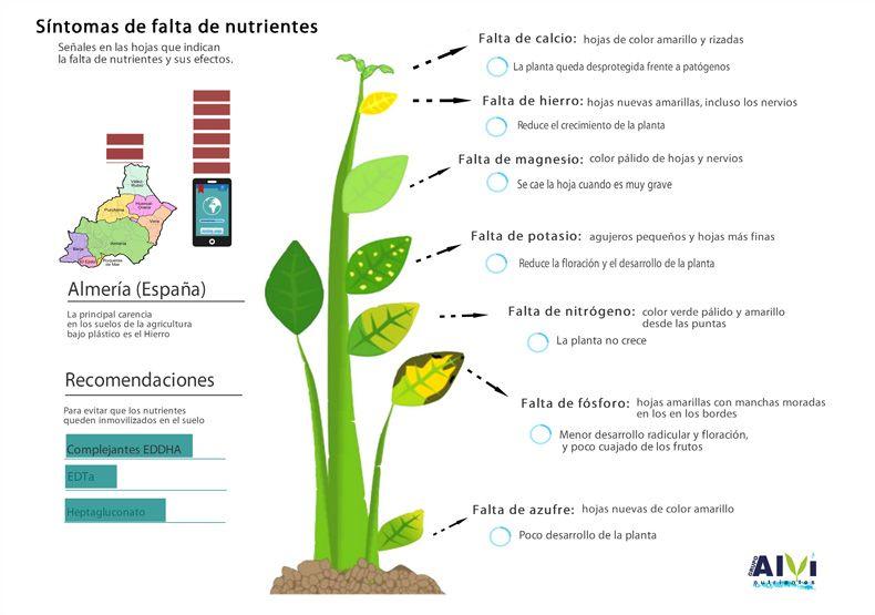 como cuidar las plantas pdf