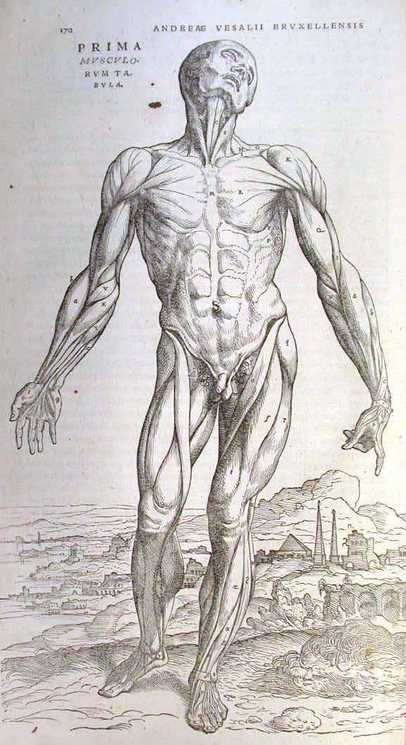 de humani corporis fabrica pdf completo