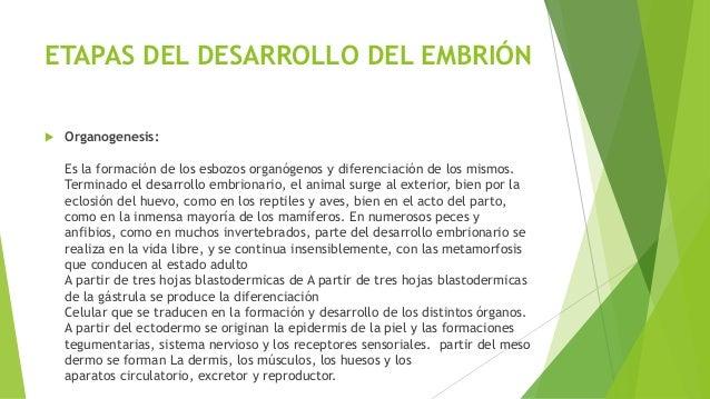 desarrollo embrionario en invertebrados pdf