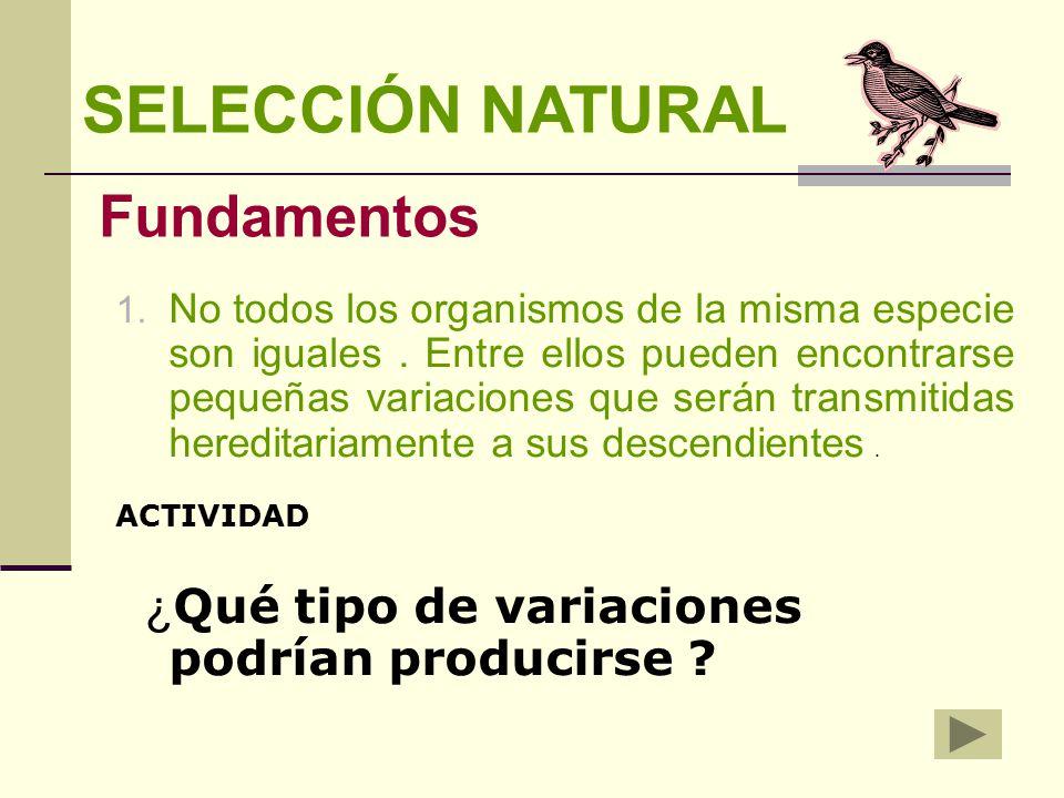 cuales son las 4 condiciones para operar la seleccion natural